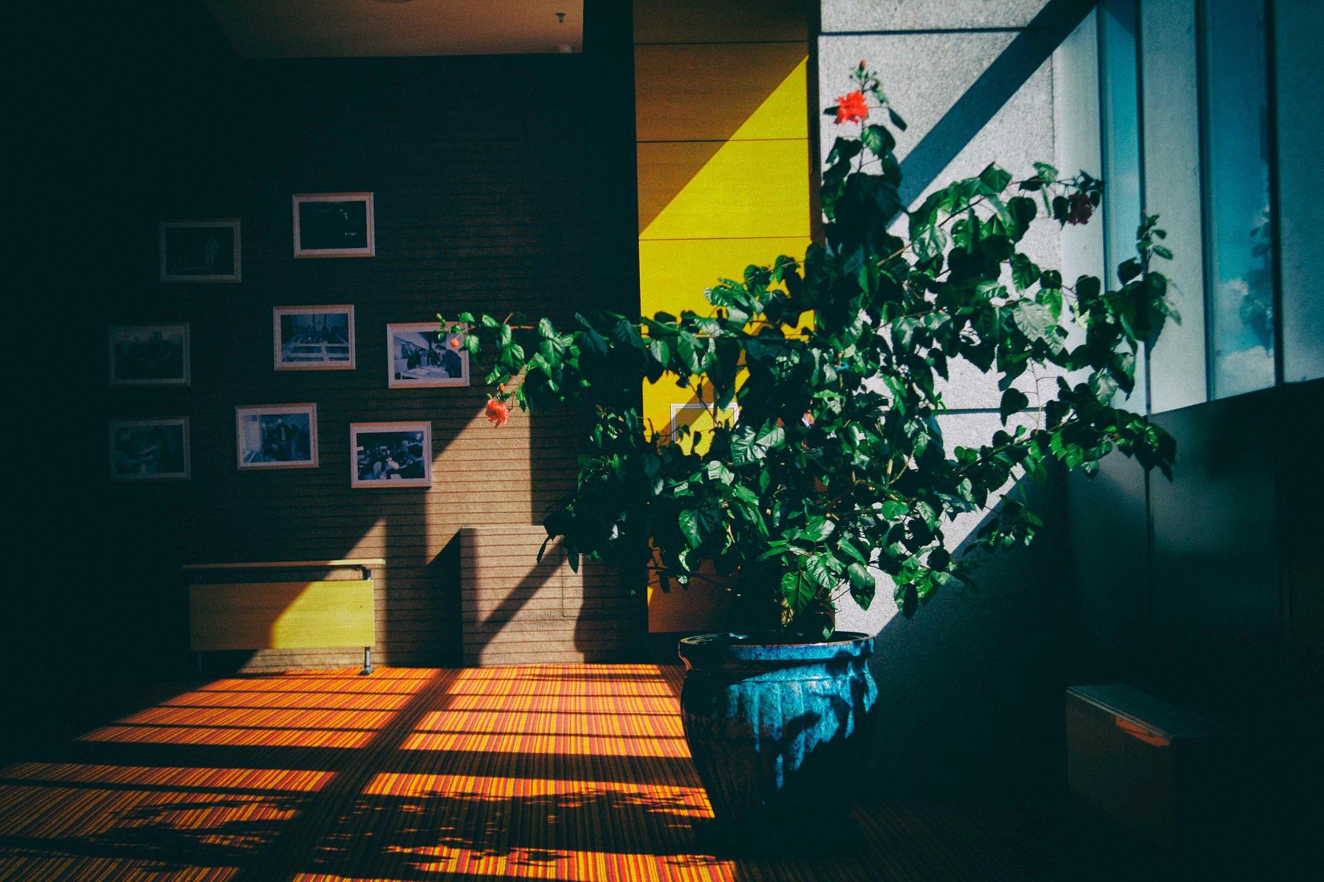 Cele 2 camere din casă care îți aduc fericire și liniște